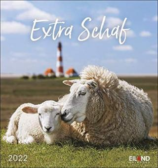Extra Schaf Postkartenkalender 2022